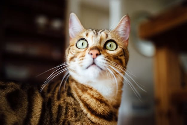 a cat with its eyes wide open staring at something